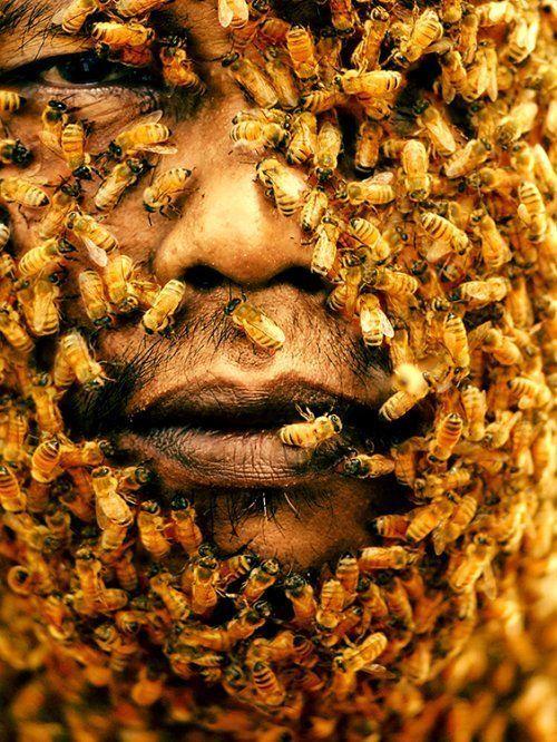 Открытка, картинки приколы пчелы