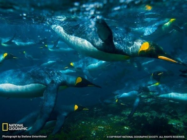 ������ ���� �� National Geographic