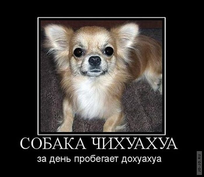 что хочу собаку демотиватор рады