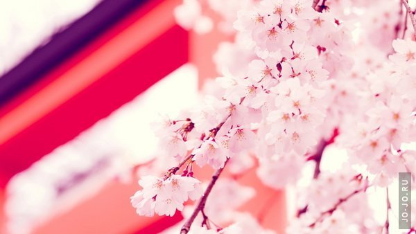 Beautiful HD Wallpapers. By Buster выпуск 40