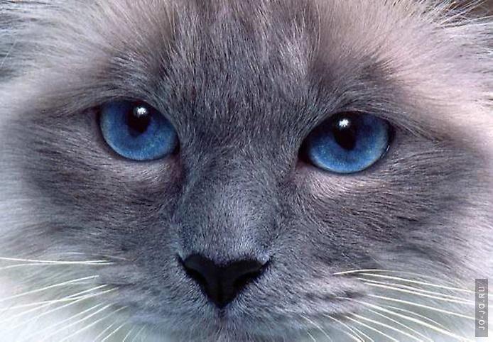 картинка кошка чб