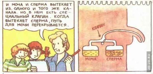 otkuda-poyavlyaetsya-sperm