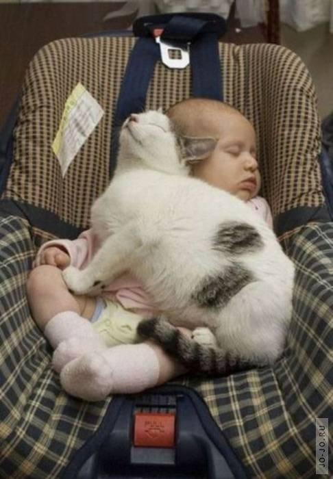 фото забавно о кошках