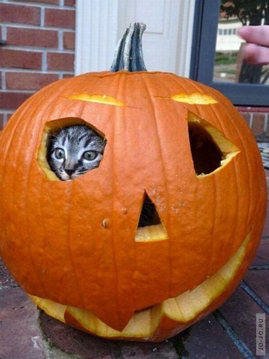 Хэллоуин приколы картинки, марта картинках подругам