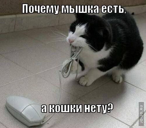 Смешные картинки про мышей с надписями