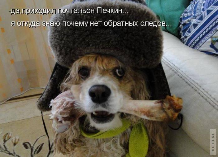 Прикольные фото собак с надписью