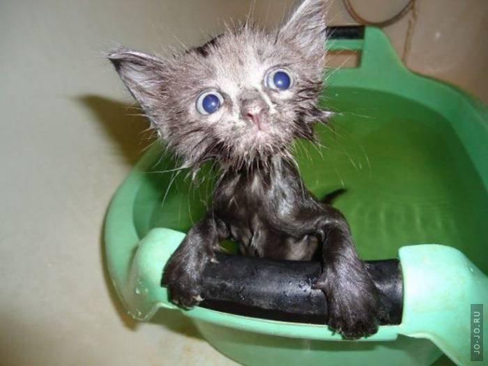 http://jo-jo.ru/uploads/posts/2011-09/1315483759_1315429882_these_funny_animals_785_03.jpg