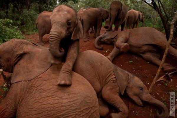 1315831144_elephant2_02.jpg