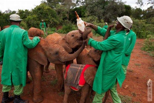 1315831157_elephant2_04.jpg
