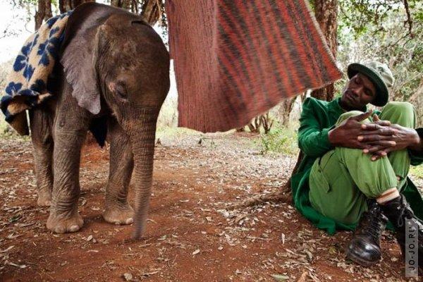 1315831165_elephant2_03.jpg