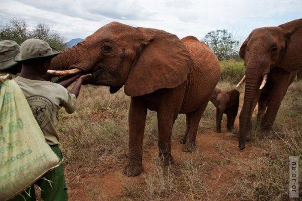 1315831186_elephant2_08.jpg