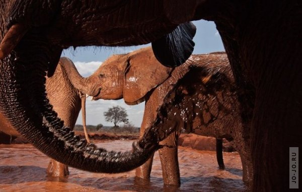 1315831187_elephant2_07.jpg