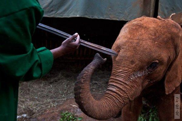 1315831196_elephant2_11.jpg