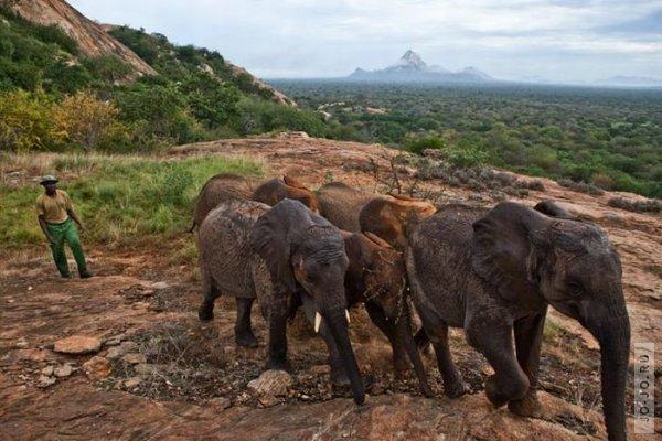 1315831224_elephant2_06.jpg