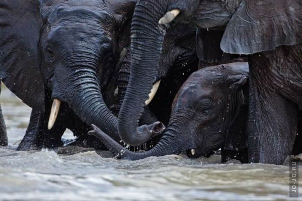 1315831268_elephant2_16.jpg