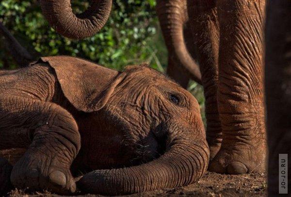 1315831276_elephant2_14.jpg