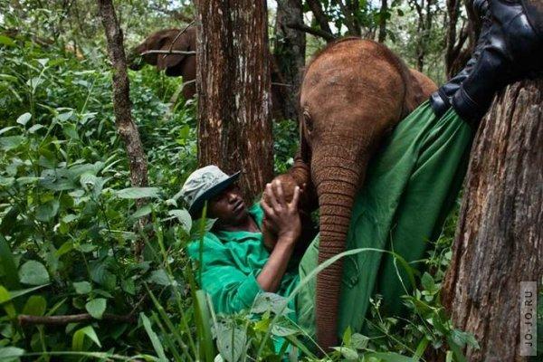 1315831316_elephant2_17.jpg