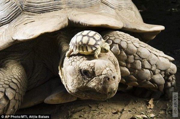 1317303185_turtles_01.jpg