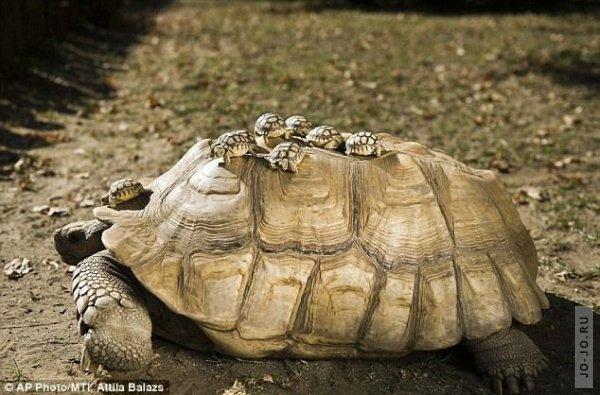 1317303201_turtles_02.jpg