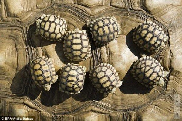 1317303222_turtles_04.jpg