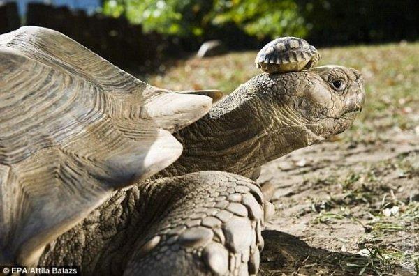 1317303235_turtles_03.jpg