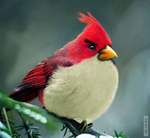 Angry Birds � �������� �����