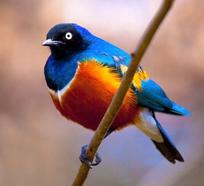 http://jo-jo.ru/uploads/posts/2012-02/1330414598_bird_photography_06.jpg