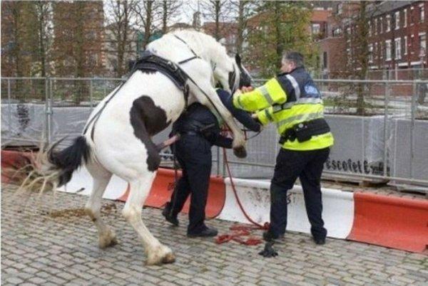 полицейский это госслужащий