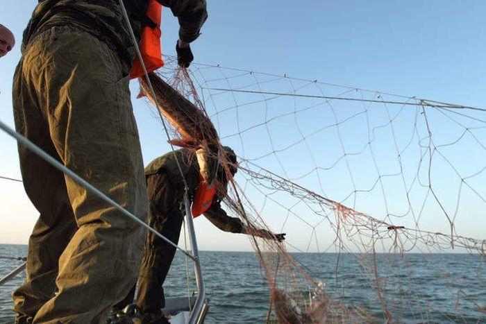 браконьеры ловили рыбу