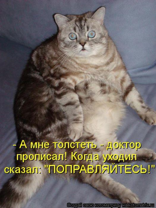 Если кошка сильно похудела - 8lapru