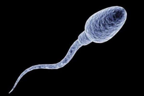 vliyanie-na-zhenskiy-organizm-spermi