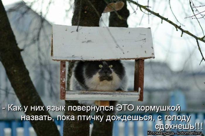 http://jo-jo.ru/uploads/posts/2013-05/1367567335_kotomatrix_08.jpg