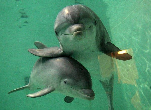 Удивительные факты о дельфинах