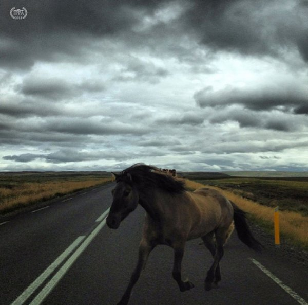 iPhone Photography Awards - 2013