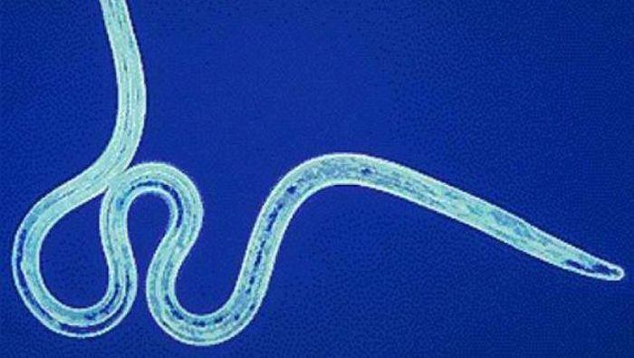 самые опасные паразиты в организме человека