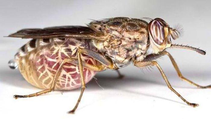 паразиты в носоглотке лечение