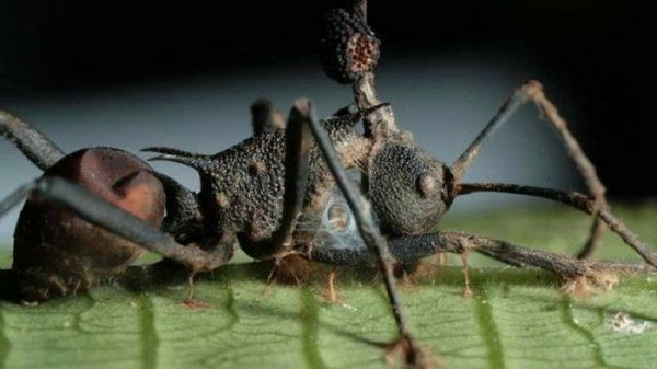 ТОП-25 самых опасных для жизни паразитов
