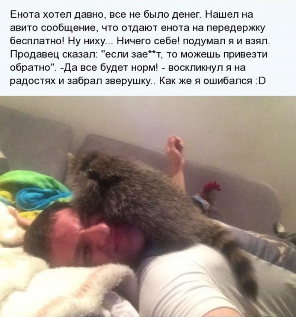 1404811312_enot_03.jpg