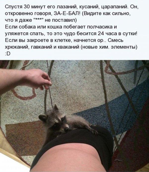 1404811319_enot_05.jpg