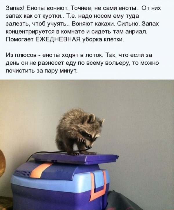 1404811353_enot_10.jpg