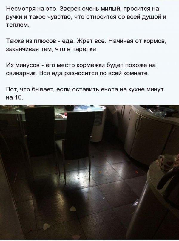 1404811377_enot_06.jpg