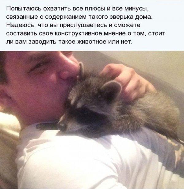 1404811381_enot_02.jpg