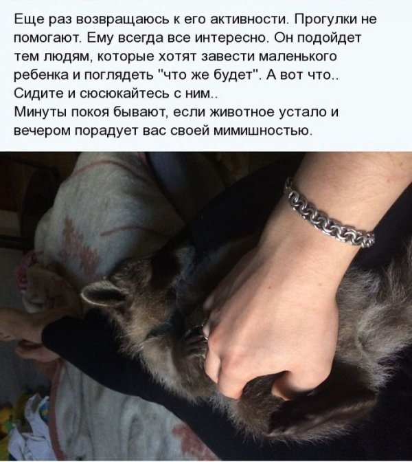 1404811428_enot_09.jpg
