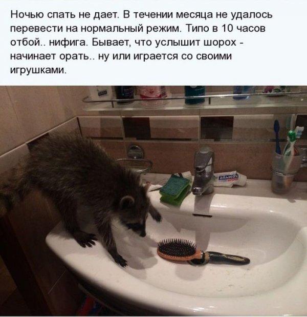 1404811466_enot_13.jpg