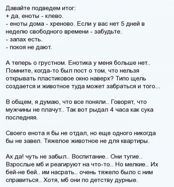 1404811467_enot_14.jpg