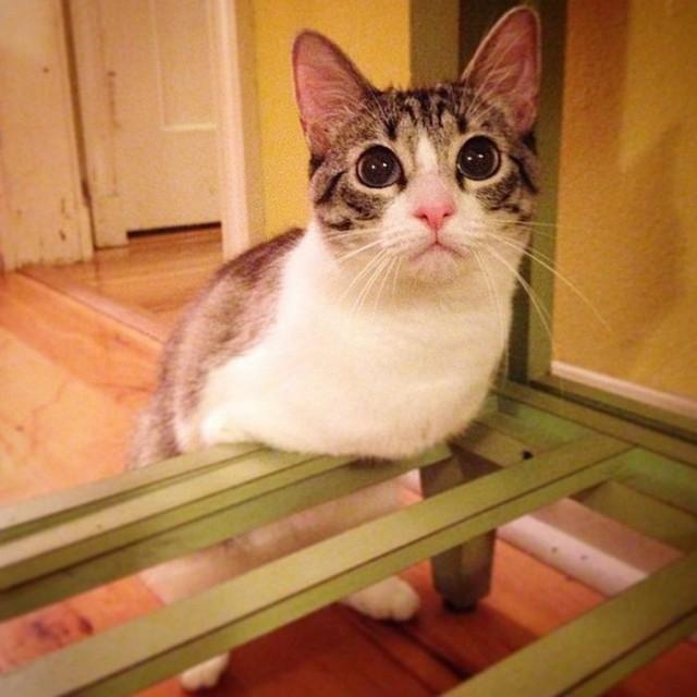 Кошка-инвалид по кличке Ру стала новой звездой Instagram