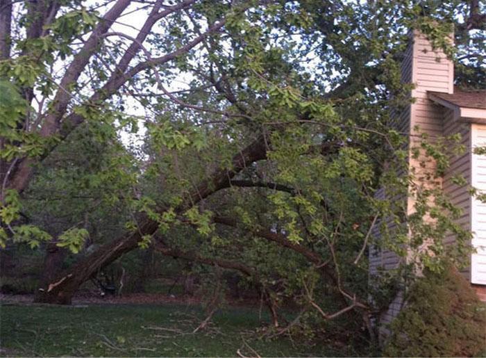 дерево пробитое соломинкой фото качеству изображений