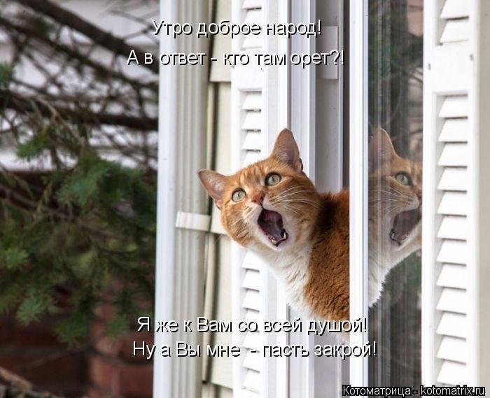 Котоматрица - 5 - Страница 11 1478002378_kotomatrix_47