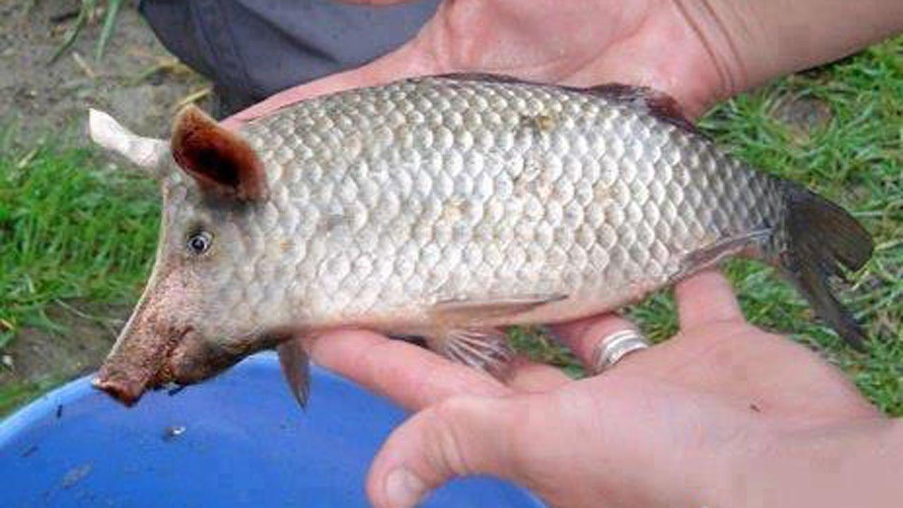 какая рыба на данный момент клюет на
