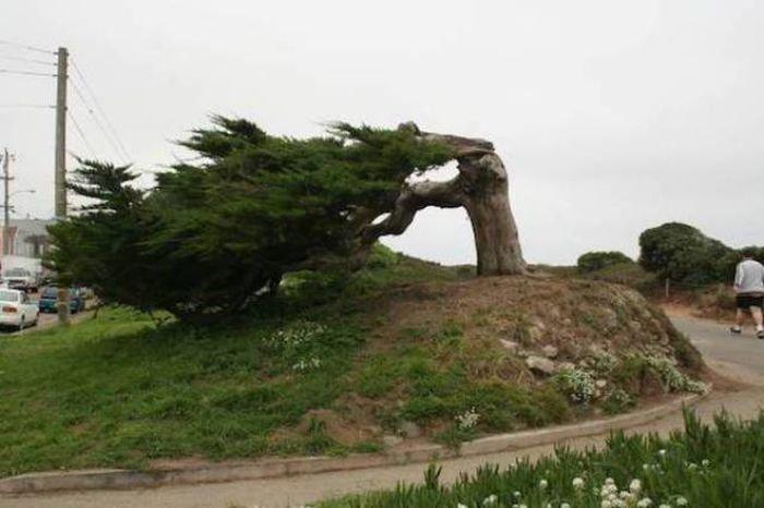 Последствия сильного ветра (42 фото)